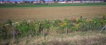 Arnemuiden dorp