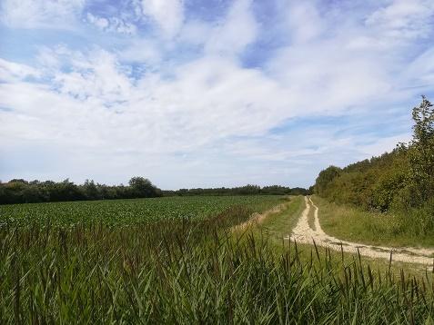 mountainbike pad galgeweg westduin