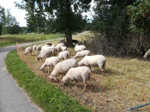 ecologisch beheer schaapskudde middelburg